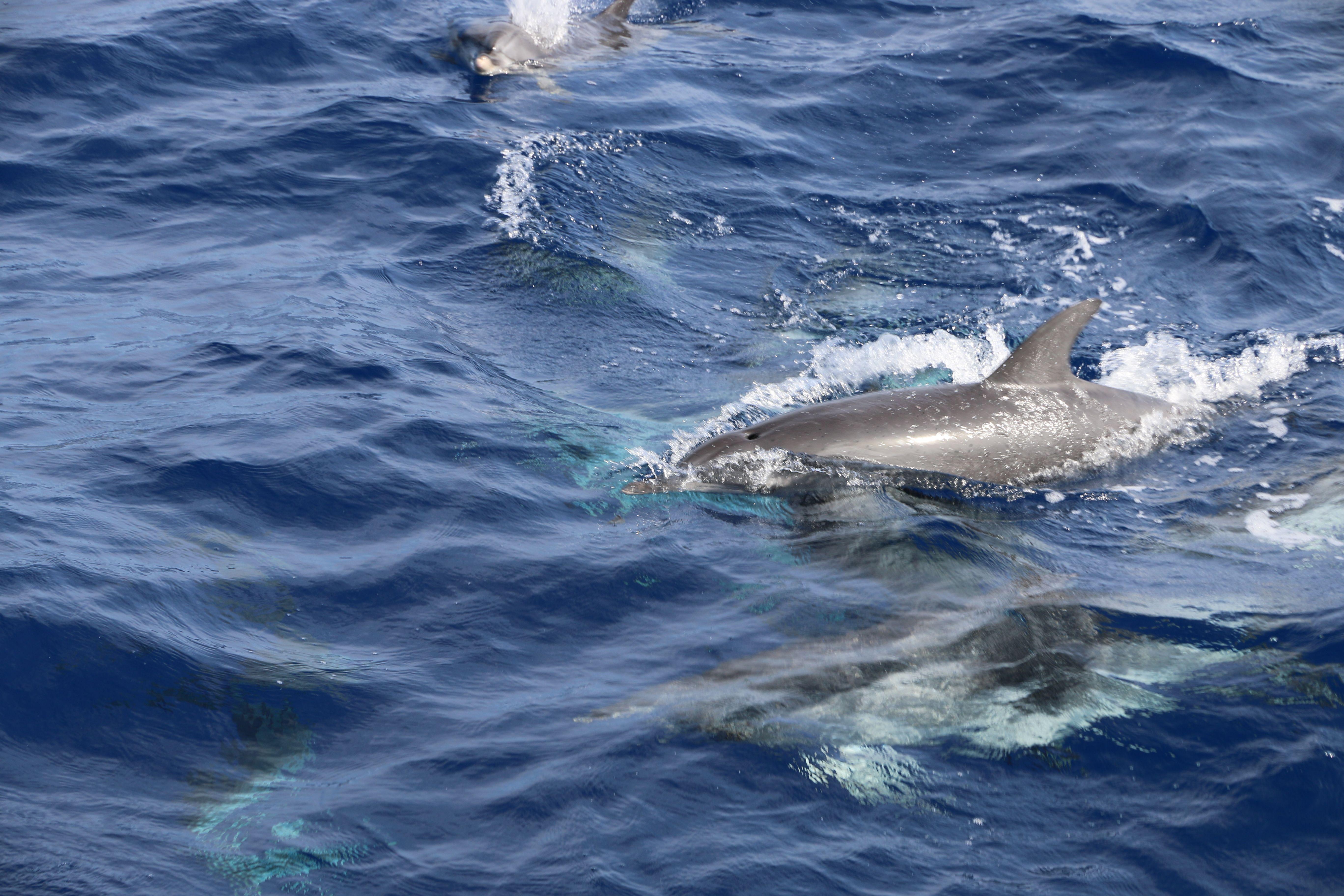 schöne delfine bilder