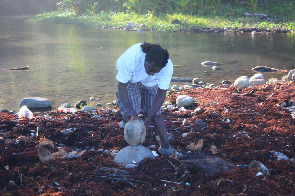 SeaCat hat die Kokosnuss mit einem Stein aufgeschlagen