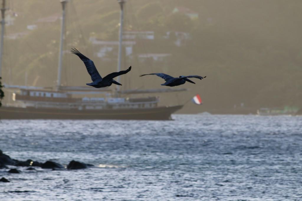 Pelikane fliegen über die Bucht