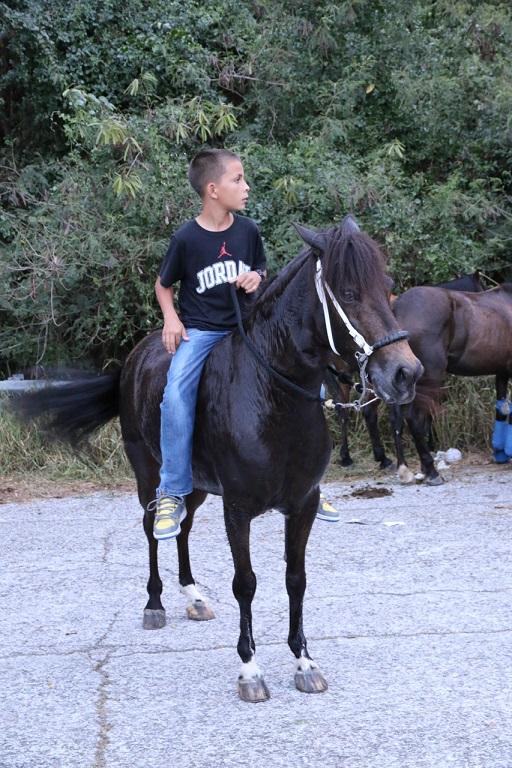 Future Champion im Paso Largo Rennen