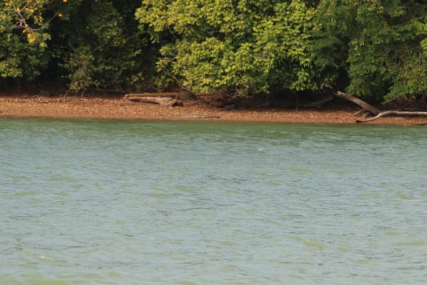 Das am Strand ist wirklich ein Gator. Davon gabs im See eine ganze Menge