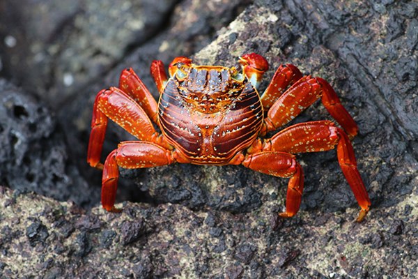 Krabbe im Hafen