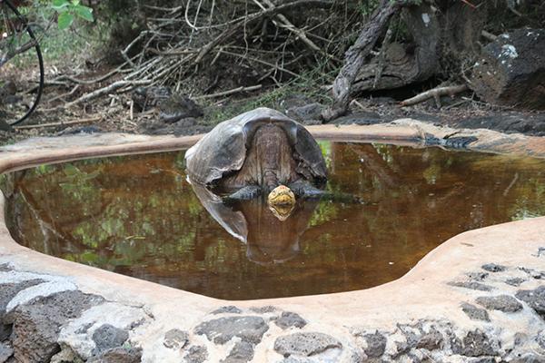 Abkühlung im Badeteich