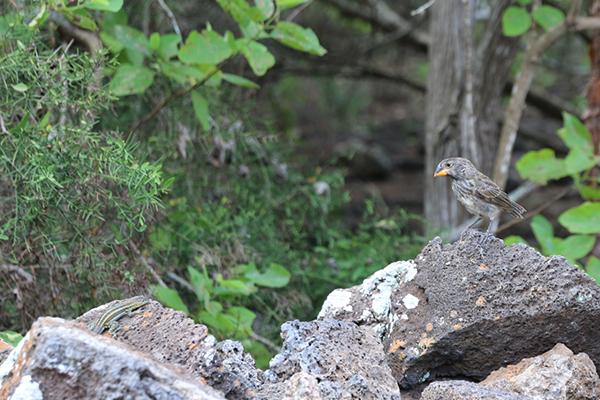 Fink und Eidechse