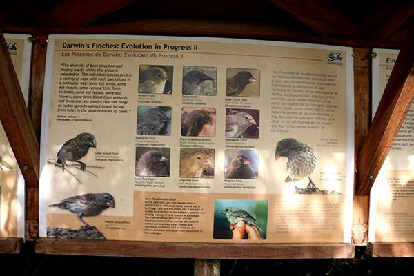 Vielfalt der Finkenarten auf Galapagos