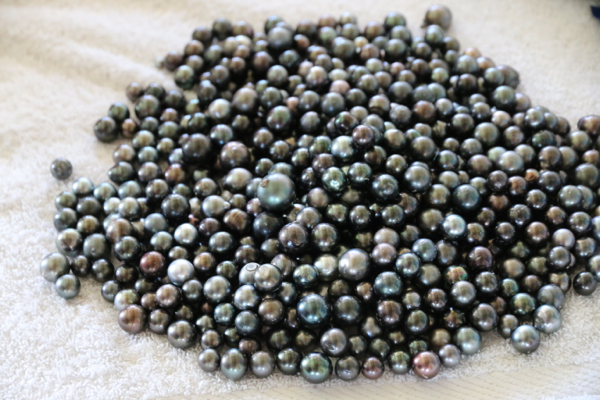 Tahiti Perlen werden nur noch auf einer Farm in Makemo produziert