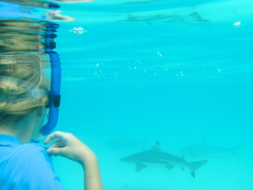 Little Thrills: Mina schnorchelt mit einigen kleinen Schwarzspitzenriffhaien