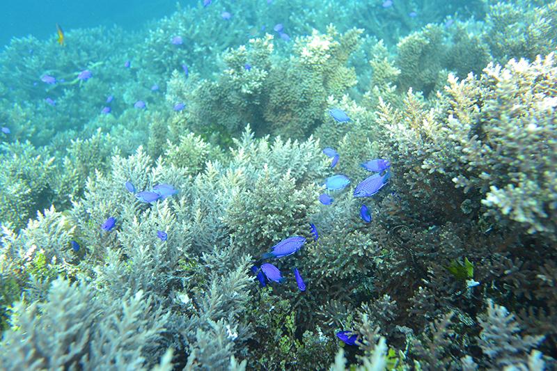 Unter Wasser in Raja Ampat: Epi-Zentrum der Meeresspezies ist schon nachvollziehbar.