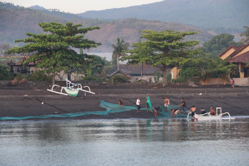 Auf zur Jagd: Gerade hat sich ein Schwarm Sardinenartiger im Wasser nah des Strandes gezeigt.