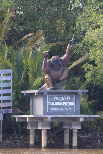 Der Kumai Nationalpark: Kein besserer Ort für eine Geburtstagsparty!