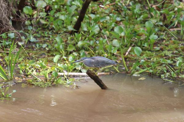 Fischer gibt es in vielen Varianten am Fluss. So...