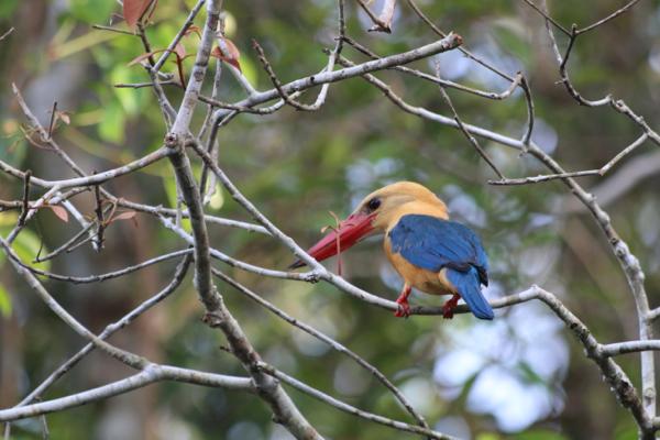 Einer der vielen bunten Vögel des weitgehende intakten Urwaldes