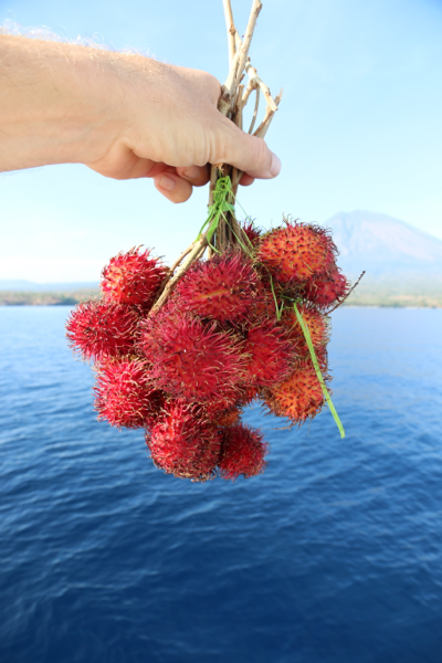 Knackfrische Rambutan