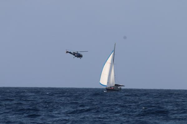 Begegnungen zwischen den Arten: Der indische Helikopter beschnuppert Tinkerbel